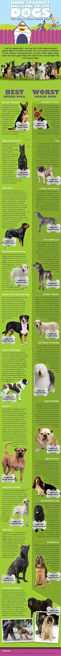 Home Security Has Gone To The Dogs. Excellent source of information about dog security and protection. Anyone interest in home security should read this!