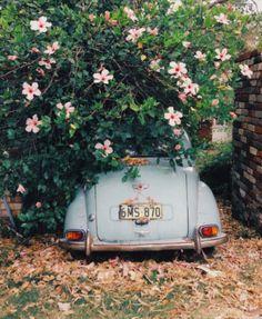 under the flower tree