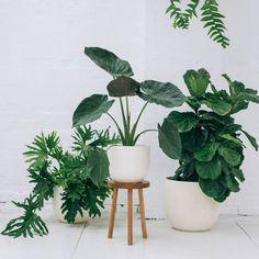 Lightweight, fiberglass planters.