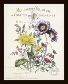 French Botanical Collage Print Set No. 2 Set of 4 Fine Art Giclee Prints - Unframed