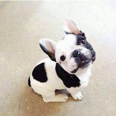 @adorable_animals #instagram