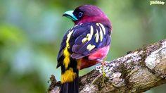 pássaros exóticos do brasil - Pesquisa Google
