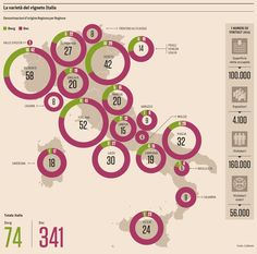 Denomination of Origin for the Grape Varietals of Italy