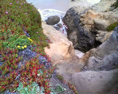 At Pescadero State Beach with friends