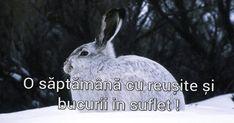 Poze cu mesaje frumoase pentru facebook: poze cu mesaje de săptămână bună Facebook, Animals, Animales, Animaux, Animal, Animais