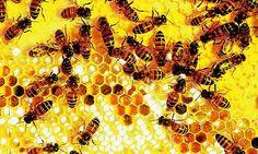 Google Afbeeldingen resultaat voor http://static.guim.co.uk/sys-images/Environment/Pix/pictures/2008/05/23/honeycomb-reso-rex460.jpg