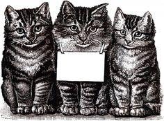 Gratuit Télécharger Cats numériques