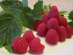 ✿⊱ Raspberries ⊰✿