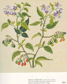 Gallery.ru / Фото #22 - Medicinal Plants - Mosca