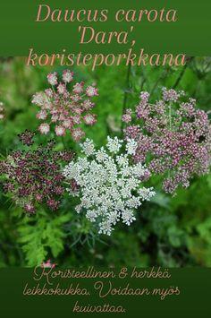 Plant Identification, Planting Flowers, Herbs, Plants, Herb, Flora, Plant, Spice