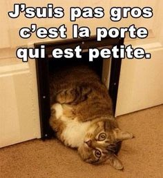"""Résultat de recherche d'images pour """"humour chat"""""""
