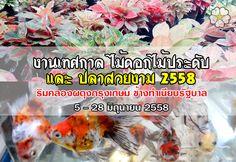 เกษตรUpdate : งานไม้ดอกไม้ประดับ ปลาสวยงาม (ข้างทำเนียบรัฐบาล)