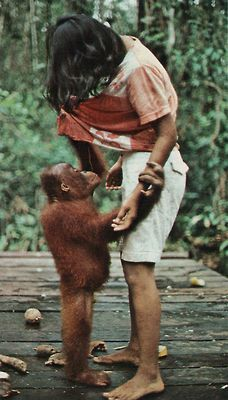 ~Teach and Embrace our World & Animals - Compassion ~ Understanding ~ Vintage National Geographic, care for Orangatans! Animals Of The World, Animals And Pets, Baby Animals, Funny Animals, Cute Animals, Mundo Animal, My Animal, Beautiful Creatures, Animals Beautiful