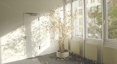 CSOK használt lakásra: a legfontosabb szabályok | JOGVADÁSZ