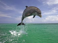 ENFP: Dolphin | What's Your Animal Personality Type? Funny because my fave animal is a dolphin :)