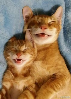 Hihihi - Like father like son Animals And Pets, Baby Animals, Funny Animals, Cute Animals, Pretty Cats, Beautiful Cats, Animals Beautiful, I Love Cats, Crazy Cats