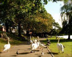 Spring arrivals, Roath park Cardiff
