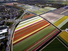 636281930908301769-EPA-NETHERLANDS-AGRICULTURE.jpg (4852×3648)