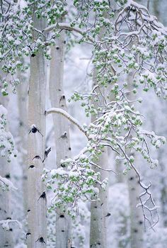 swansong-willows: (via ** winter | Winter's beauty ☃ | Pinterest)