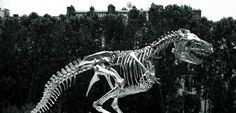 "T-Rex Photography, Paris, Seine River, Dinosaur, Skeleton, Large Wall Art Print, Fine Art, ""T-Rex On The Seine"", 20 cm x 30 cm, 8"" x 12"" by RePix on Etsy"