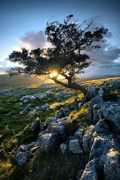Yorkshire dales England by Tristan Campbell Nature Pictures, Cool Pictures, Cool Photos, Beautiful World, Beautiful Places, Mystical Forest, Natural World, Amazing Nature, Mother Nature