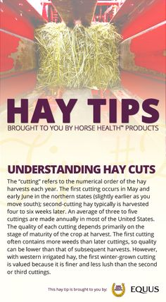 Although there are some differences in the cuttings, the quality of the hay is much more important than the cutting. From a nutritional standpoint, all cuttings can result in prime horse hay.  After learning more about hay cuts, enter for a chance to win up to $10,000 worth of hay >>http://bit.ly/EQ-Winter-Hay-Sweepstakes