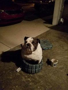 If I fits I sits