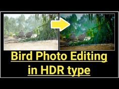 In this video you see to how to give some hdr look in photo by editing and also you come to know about composition in photo. Let's click it! bird photo editing | nature photo editing | by photography and technology | hdr photo editing | how to edit photo on lightroom | how to […]