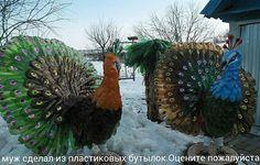 Plastic bottle - peacock