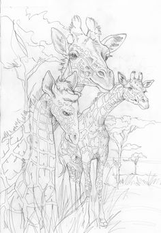 Bergsma Gallery Press :: Paintings :: Originals :: Original Sketches :: 2014/Giraffes - Original Sketch