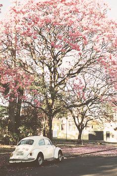 #spring #blossom #tree #vw