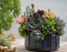 Succulent Design in a Susan Aach container via Susan Aach Ceramics  design/photo: The Succulent Perch