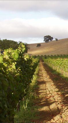 Trahan Winery - Napa, California #Napa #California #StayNapa #hotel #inn #enjoy #fun #relax #pampered #NapaValley #wine #winery #winetasting #best #taste