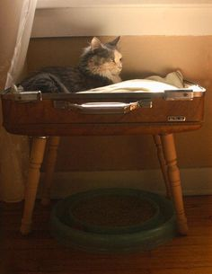 This DIY tutorial will show you how to create a homemade pet bed from a hard-shelled vintage suitcase.