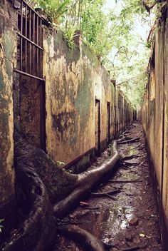 """Abandoned prison. Nothing is truly abandoned. """"A tree will always find its way..."""""""