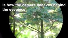 Watch this video!   Point and Shoot for Wildlife, Birding edition Video-Review by www.TECHEYES.com     Don't forget to subscribe to TechEyes TV channel!