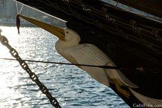 Ship Figureheads (animals)
