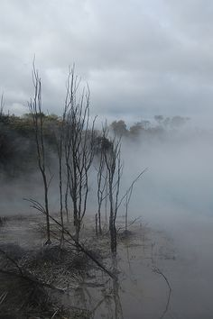 Eerie. The town park in Rotorua New Zealand, freaky and breath taking