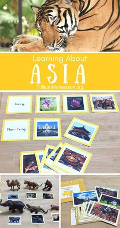 Preschool Activities for Learning About Asia Best Picture For Montessori Activities board For Your Taste You are looking for something, and it is going to tell you exactly what you are looking for, an Continents Activities, Multicultural Activities, Geography Activities, Geography Lessons, Teaching Geography, Montessori Activities, Montessori Elementary, Montessori Materials, Montessori Homeschool