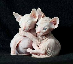 naked kitties <3 Oh! They look so cold,poor babies. Quick someone knit them some tunic sweaters, those will keep them toasty warm.