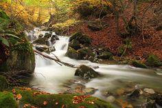 Si quieres ver osos pardos en Asturias o te gusta hacer actividades al aire libre la Senda del Oso será una experiencia de esas que no olvidas. Empieza en Tuñón y acaba en Entrago, recorriendo paisajes naturales, cruzando ríos y atravesando túneles reclamados por la naturaleza por donde pasaba el tren minero de los valles de Trubia, Teverga y Quirós. Cerca del km 6 hay un recinto en el que viven las osas Paca y Tola, recogidas cuando crías después de que un cazador matara a su madre.