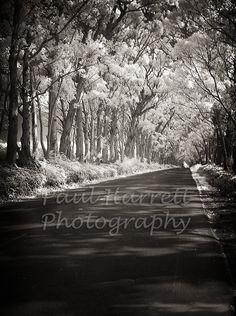 tunnel of trees on Kuaui, Hawaii.... I was there, oh this brings back wonderful memories