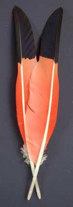 Atlantic Salmon Fly Tying Materials | Classic Salmon Fly Tying Materials | Rare and Exotic Feathers