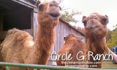 Circle G Ranch in Strawberry Plains, Tennessee - Or maybe here?