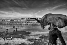 A story of deep wounds and of People without a Country(in italiano piu' sotto) A story by Edoardo Agresti The . Elephant, Change, Country, Animals, Animales, Rural Area, Animaux, Elephants, Animal