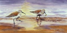 Dunlins - watercolor 20 x 10 inches by Toni Kelly Bird Paintings, Birds, Watercolor, Studio, Nature, Animals, Inspiration, Art, Paintings Of Birds