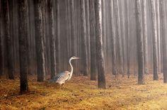 Morning Solitude | Flickr - Photo Sharing!