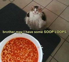 We want to make you laugh for whole day.So that's why today collect some cat Dank memes for your laughing.These cat Dank memes are so hilarious and humor.Just scroll down and keep enjoy these cat Dank memes. Funny Babies, Funny Kids, Funny Cute, The Funny, Funny Stuff, Funny Things, Daily Funny, Funny Moments, Funny Memes