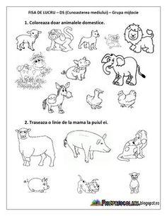 FISE de lucru cu Animale DOMESTICE Grupa mica, Grupa mijlocie, Grupa mare | Fise de lucru - gradinita