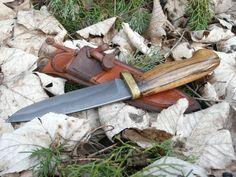 wild boar sharp tusk